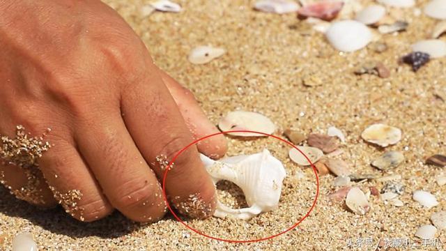 泰国旅游的时候为什么不能在海边捡贝壳