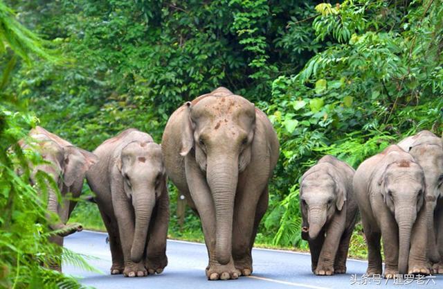 去泰国旅游景点推荐:这几个地方值得去