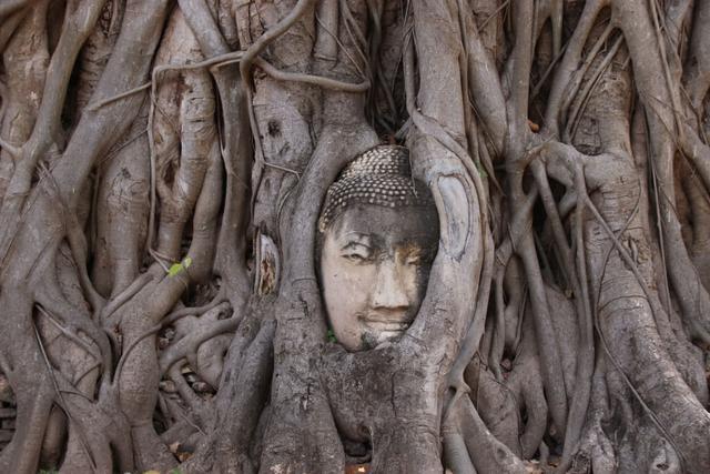 佛头被树抱了数百年,意外成为旅游胜地